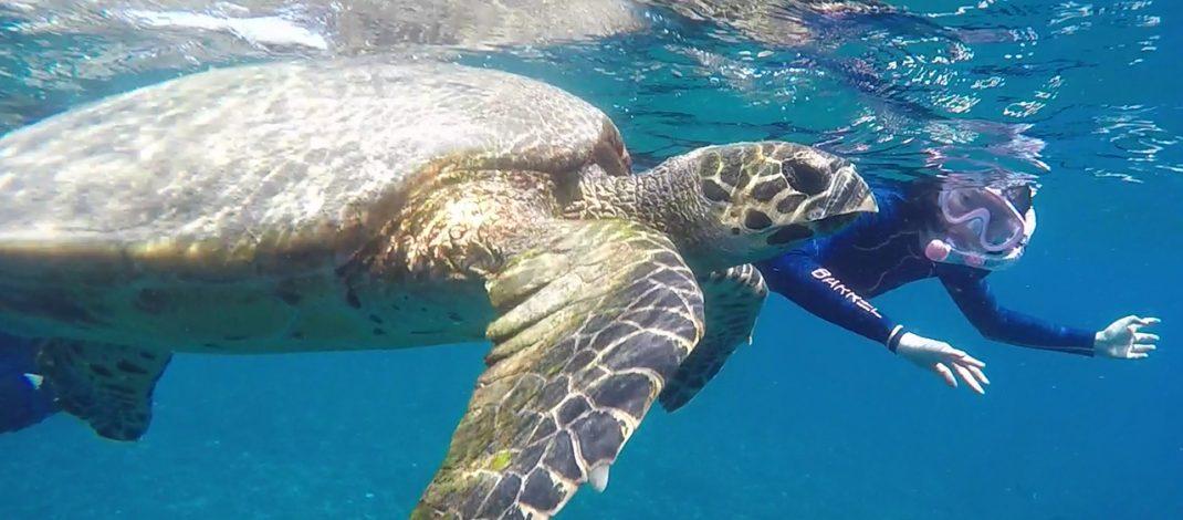 Snorkeling Tour gili trawangan, meno, air